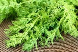 basur hemoroid bitkisel tedavisi